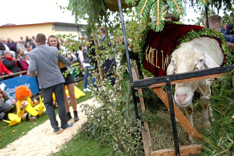 Der Hammel, das Schaf und ein Tanzpaar.